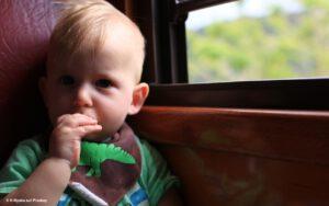 Read more about the article Vegan, vegetarisch oder Mischkost?