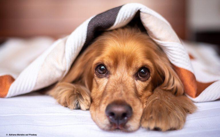 Kinder schlafen mit Haustieren oft besser