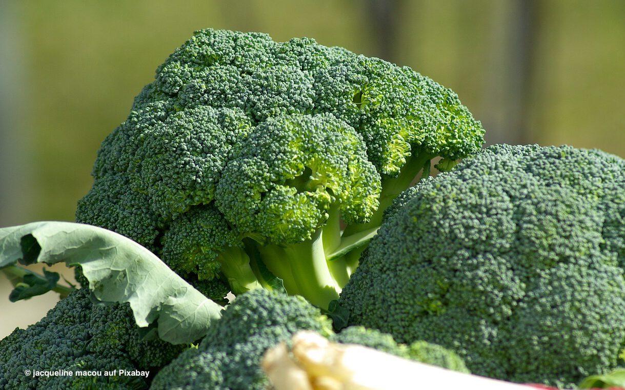Read more about the article Warum viele Kinder keinen Brokkoli mögen